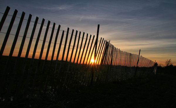 Fenced in at Sunset