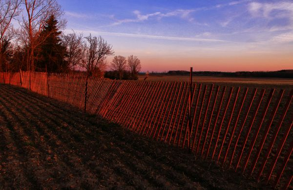 Fence Lit Up by Sunset