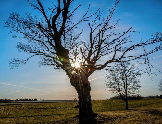 Tree at 18038