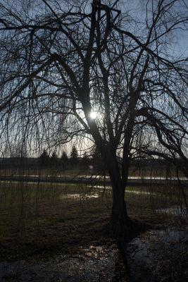 Tree Silhouette CB