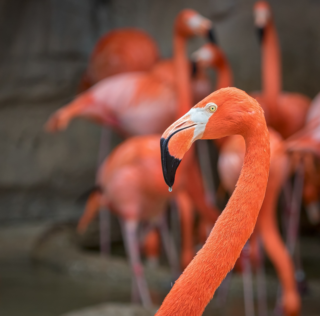 Dripping Flamingo