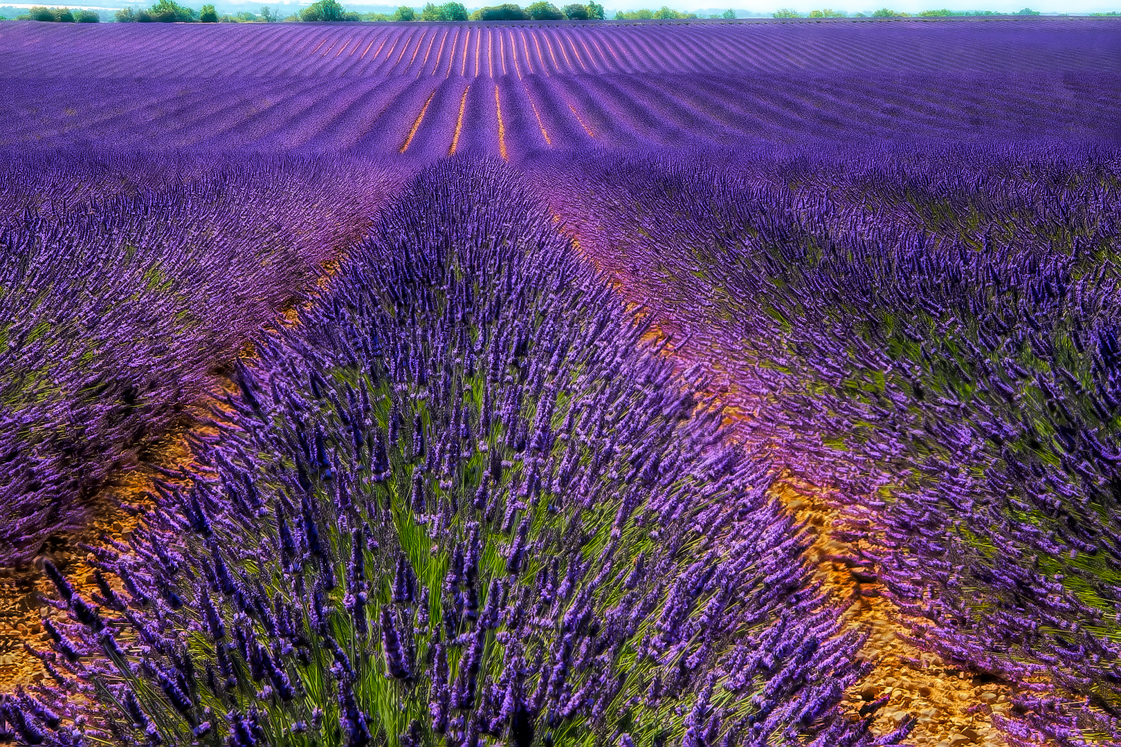 Waves Of Lavender