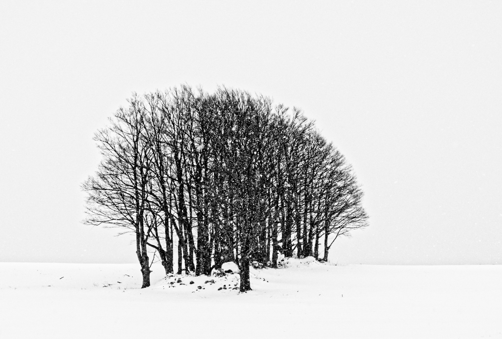 Thicket In A Snowstorm