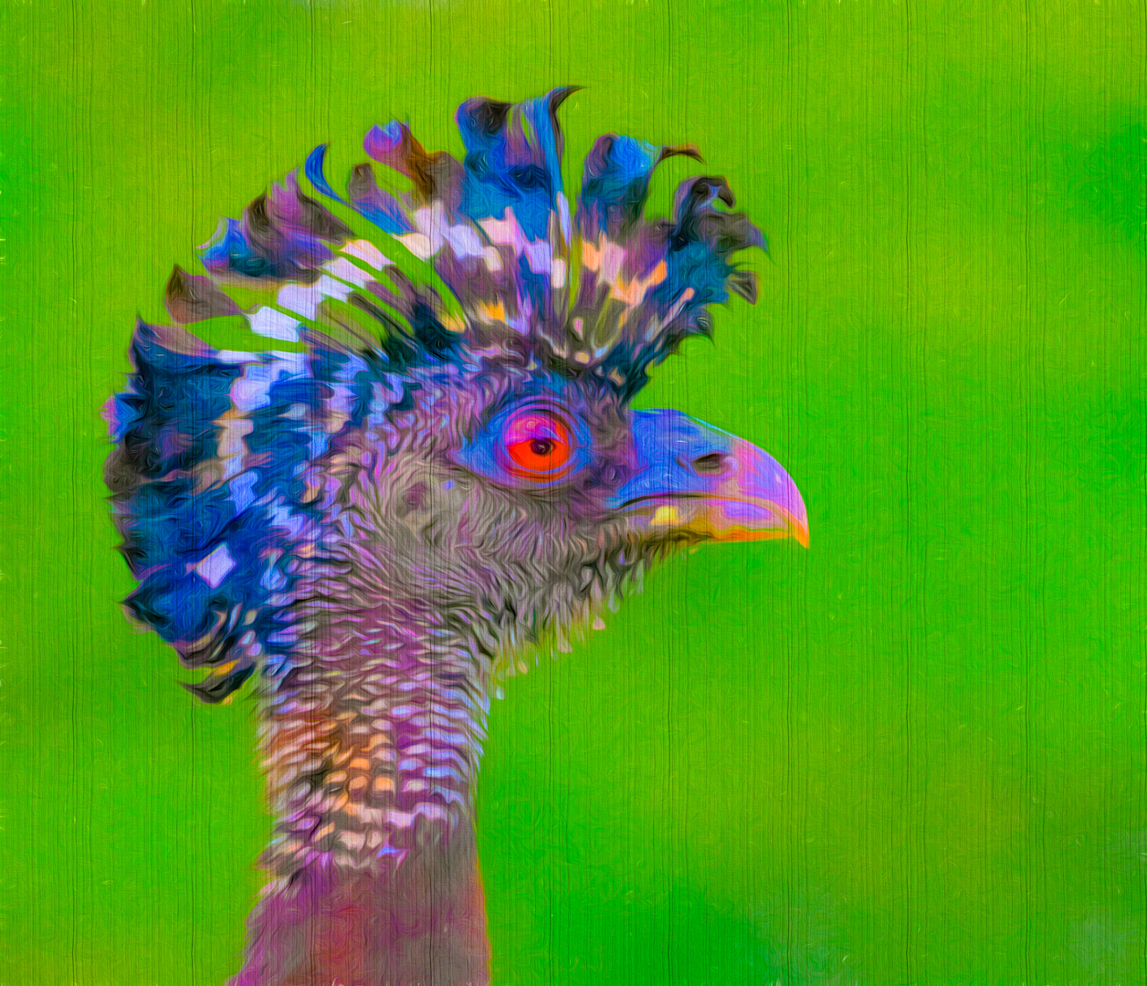 funky Great Curassow