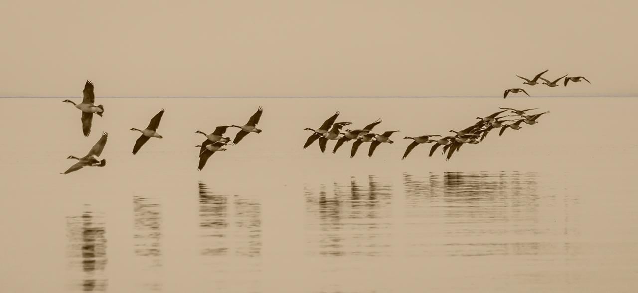 The Flight Ballet