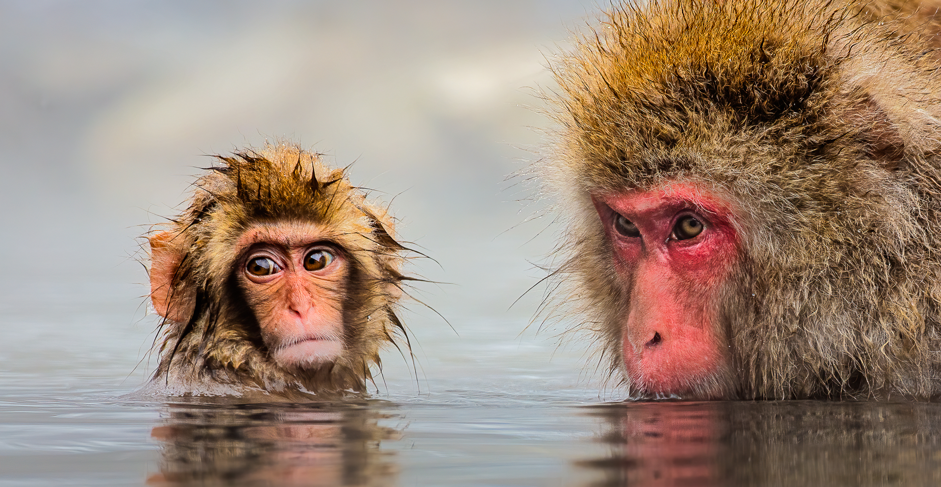 Baby And Adult Snowmonkey