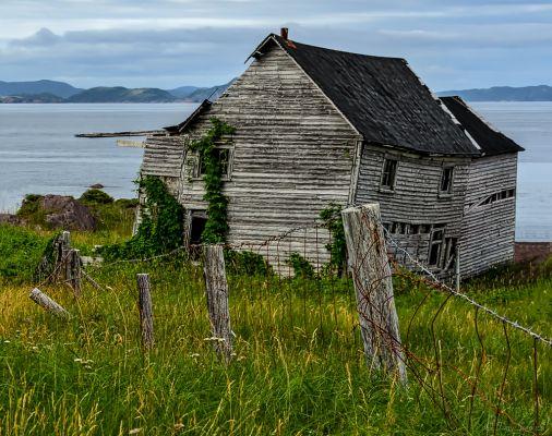 Remnants of a Coastal Homestead