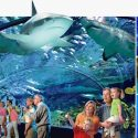 Outing: Ripley's Aquarium